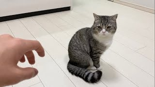 ニンニクラーメンを食べて帰ったら猫がこうなりました…泣