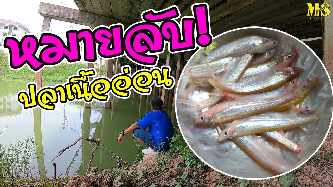 ตกปลาเนื้ออ่อนที่หมายลับ เพื่อมาทำสุดยอดเมนู! [ EP.22]