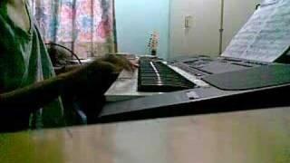 Cuppycake song - Amy Castle - Piano Cover - CJ