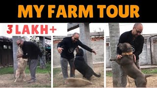 Our dog Farm Tour || Diwali Safety Tips For Dogs || Puppy's || Cats || Pets || BHOLASHOLA