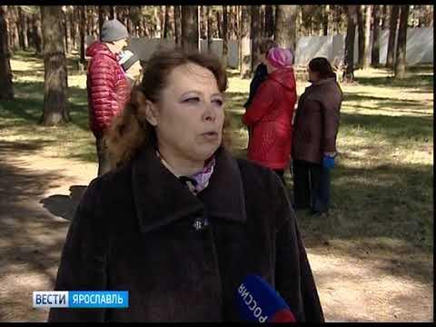 В Заволжском районе Ярославля на месте соснового бора разрослась стройка