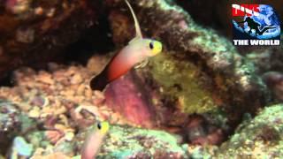Tauchen auf den Malediven: Tauchen mit Mantas, Haien -- die besten Tauchplätze der Malediven