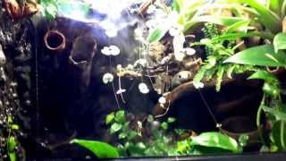 Live Planted vivarium with waterfall for sale