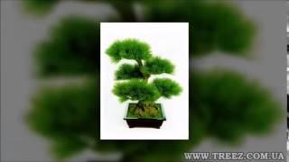Искусственные растения купить