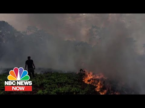Conservationist On Amazon Wildfires: This Is Not An Isolated Problem  NBC News