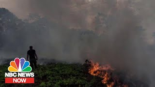 Conservationist On Amazon Wildfires: 'This Is Not An Isolated Problem' | NBC News Now