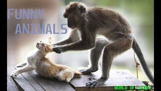 THE FUNNY ANIMALS FROM THE WHOLE WORLD !!!