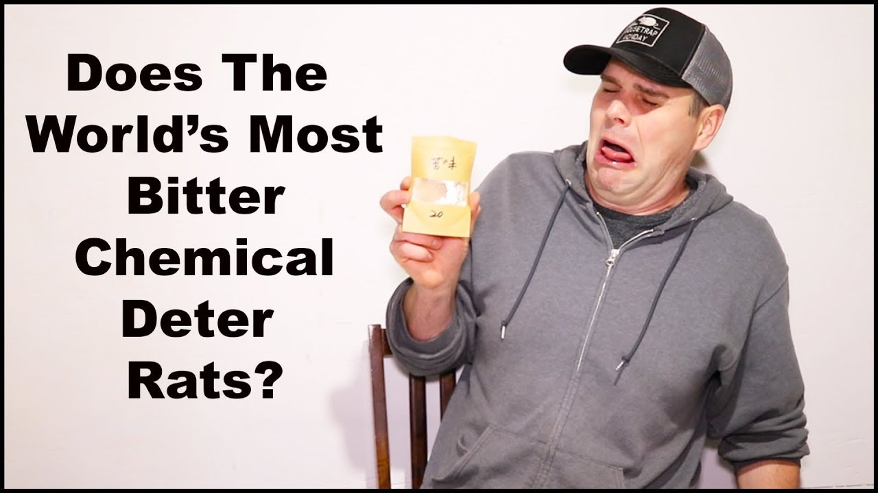 does-the-world-most-bitter-chemical-deter-rats-mousetrap-monday