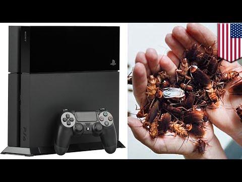 Kecoak suka bersarang di PS4 anda! - Tomonews