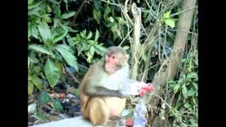 Funny video about how a monkey advertises Coca Cola.Смешное видео о том как обезьяна кока колу.