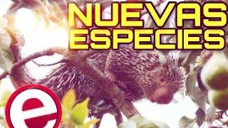 10 especies descubiertas en el 2013
