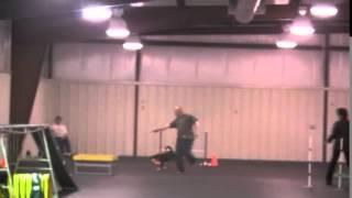 Entlebucher 'cattle Dog' Akc Agility Masters Standard