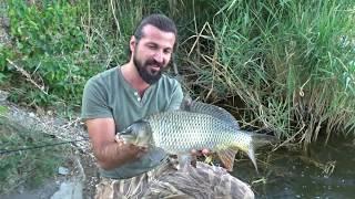 Almanya Sazan Avı Carp Fishing Abtsdorfer See Lake Germay 3 Bölüm Part 2