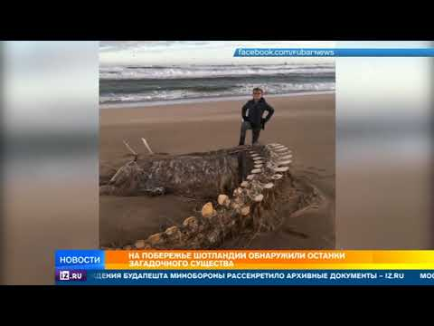 На побережье Шотландии обнаружили останки загадочного существа