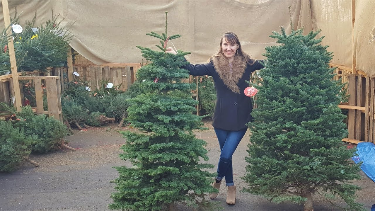 Live Christmas Trees From Home Depot Review