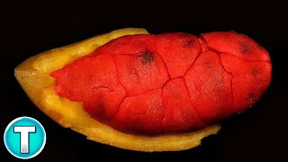 Top 10 Fruits You've Never Heard Of Part 13
