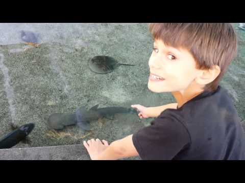 Touching sharks at Aquarium of the Pacific Long Beach CA - Zack n Zane
