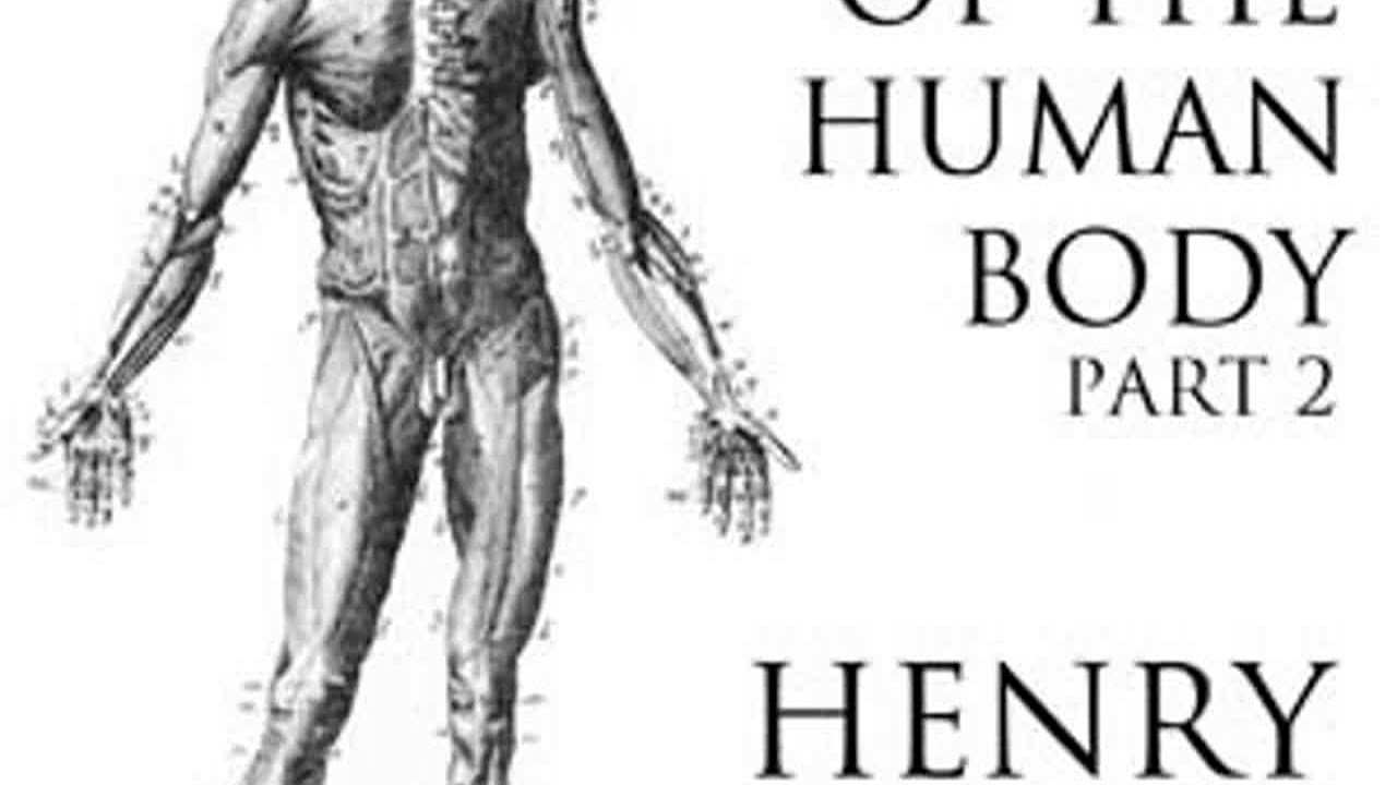 Anatomy Of The Human Body Part 2 Grays Anatomy By Henry Gray