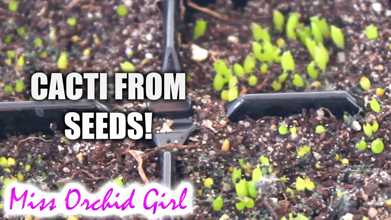 Starting Cacti from seed