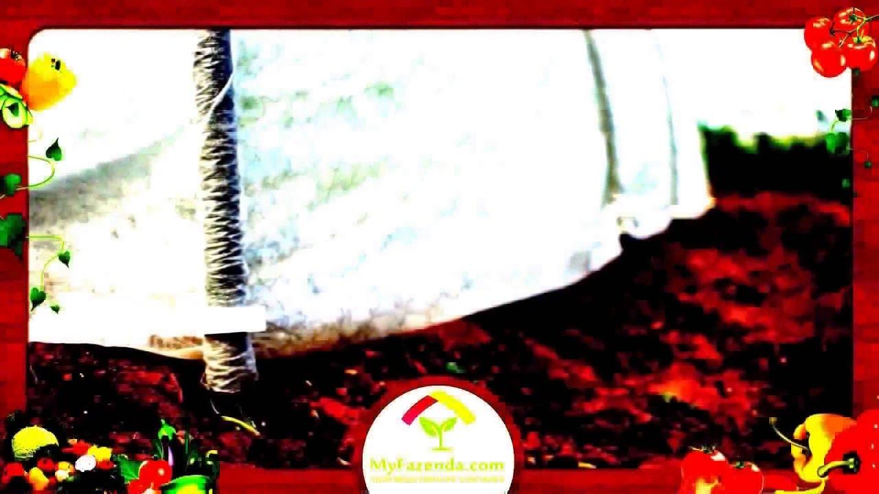 Производство и оптовая продажа полиэтиленовой пленки гост 10354-82 от производителя в санкт-петербурге. Белая прозрачная парниковая пленка для теплиц. Где купить прозрачную пленку для парников в рулонах. Прайс лист. Печать на прозрачной пленке в спб.
