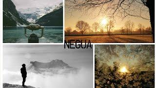 NEGUA - Chilly #5 Negua