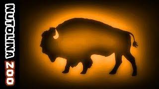 Buffalo sound / Buffalo sounds / Animal sounds buffalo