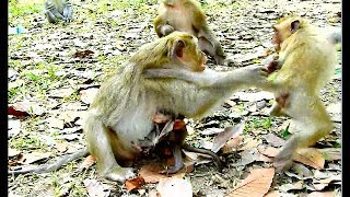 Monkey Brianna try warning her daugther don't play with her baby