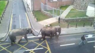 ELEPHANTS!!! (running wild on the streets of Waterford!)