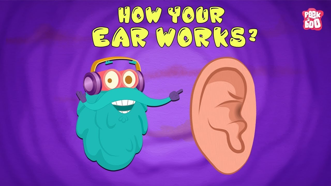 Download How Your Ear Works? - The Dr. Binocs Show   Best Learning Videos For Kids   Peekaboo Kidz