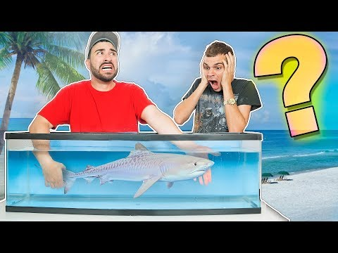 Thumbnail: What's in the Box CHALLENGE (UNDERWATER EDITION)