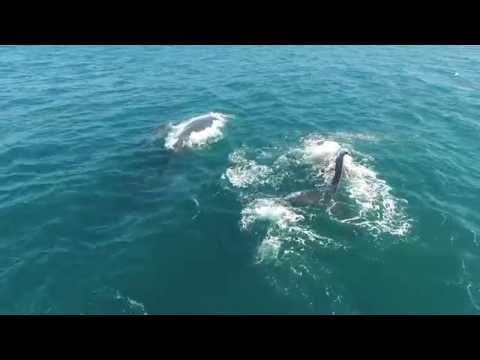 Whale Watching from Aqua Ceu Beach resort Mozambique 2