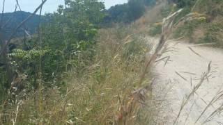 ASMR: Шаги по лесной тропе.