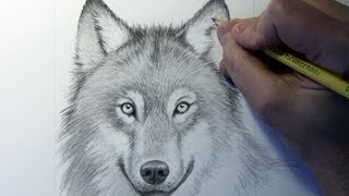 Drawing Time Lapse: Wolf