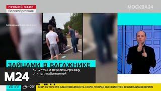 Английская семья после путешествия по Франции обнаружила зайцев в багажнике - Москва 24