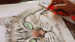 Процесс рисования кота | to draw a cat(Цветные карандаши. Бумага 29х42 см В ролике использована музыка: Композиция