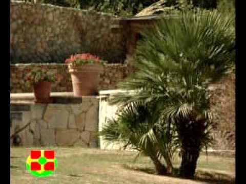 Realizzazione verde giardini giardinaggio piante cagliari for Vendita piante da frutto sardegna
