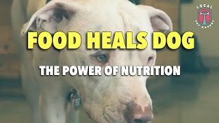 The Power of Nutrition: Pet Food Heals Dog