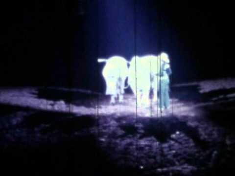 Leon Adams Roman Riding Two Brahman Bulls around 1975