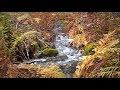 Water Sounds Relaxing Creek rippling (Autumn scenery - natural sounds)