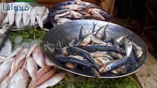 بالفيديو   اسعار الاسماك في سوق الوراق