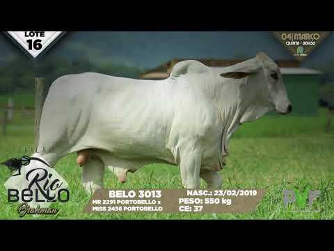 LOTE 16   BELO 3013