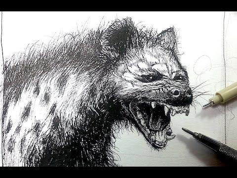 Pen & Ink Drawing Tutorials   Draw a Hayena