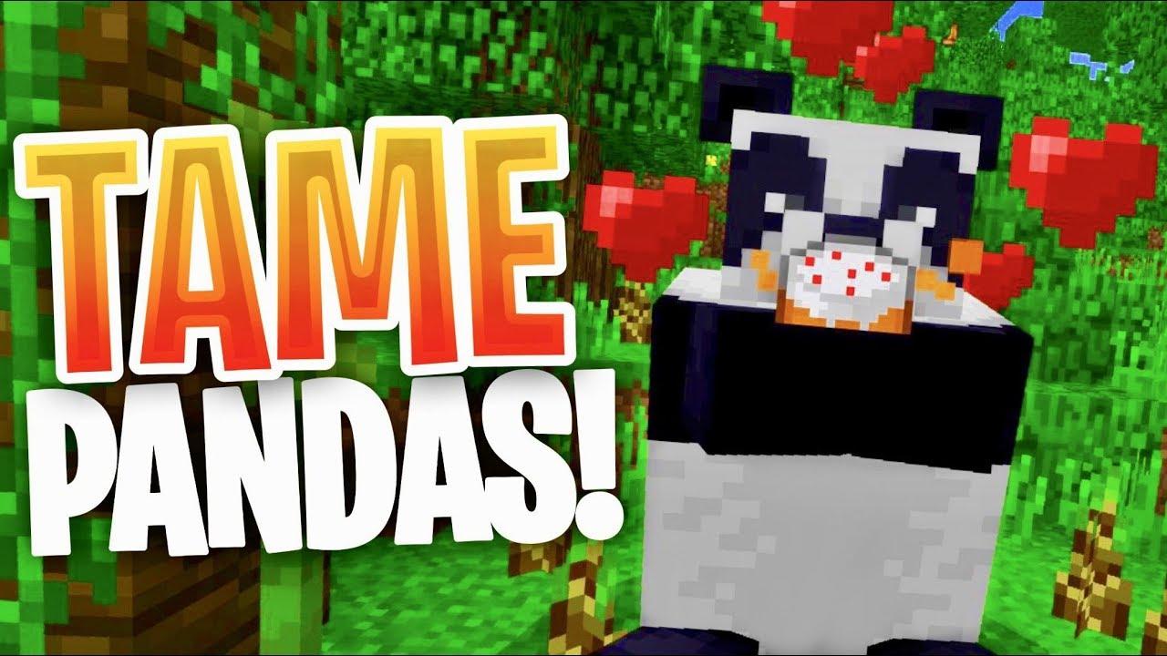 Minecraft - How to TAME Pandas in Minecraft (Bedrock Edition) (Minecraft PE)