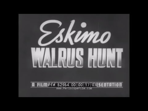 1930s ESKIMO LIFE & WALRUS HUNT DOCUMENTARY By DONALD B. MACMILLAN  62964