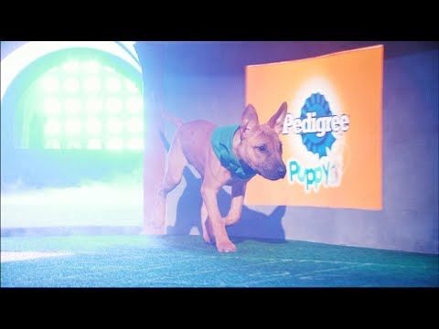 Puppy Profile: Savannah the Bull Terrier | Puppy Bowl XIV