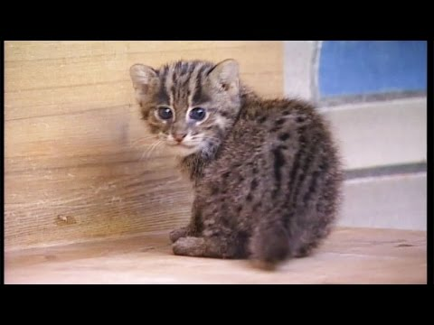 Swimming fish video for cats, 3 HOURS OF FUN from YouTube · High Definition · Duration:  2 hours 59 minutes 41 seconds  · 397.000+ views · uploaded on 25.11.2015 · uploaded by Little Thomas Boy