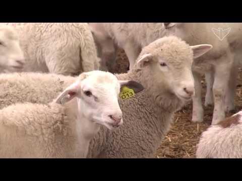 Savor Dakota: Sturdy Post Ranch- Ward
