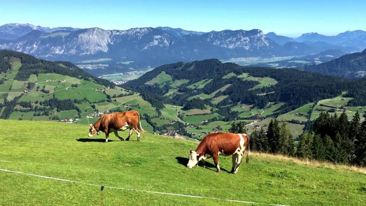 Single urlaub österreich sommer