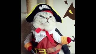 #Крутые товары с AliExpress ( прикольные смешные костюмы для кошек и собак )