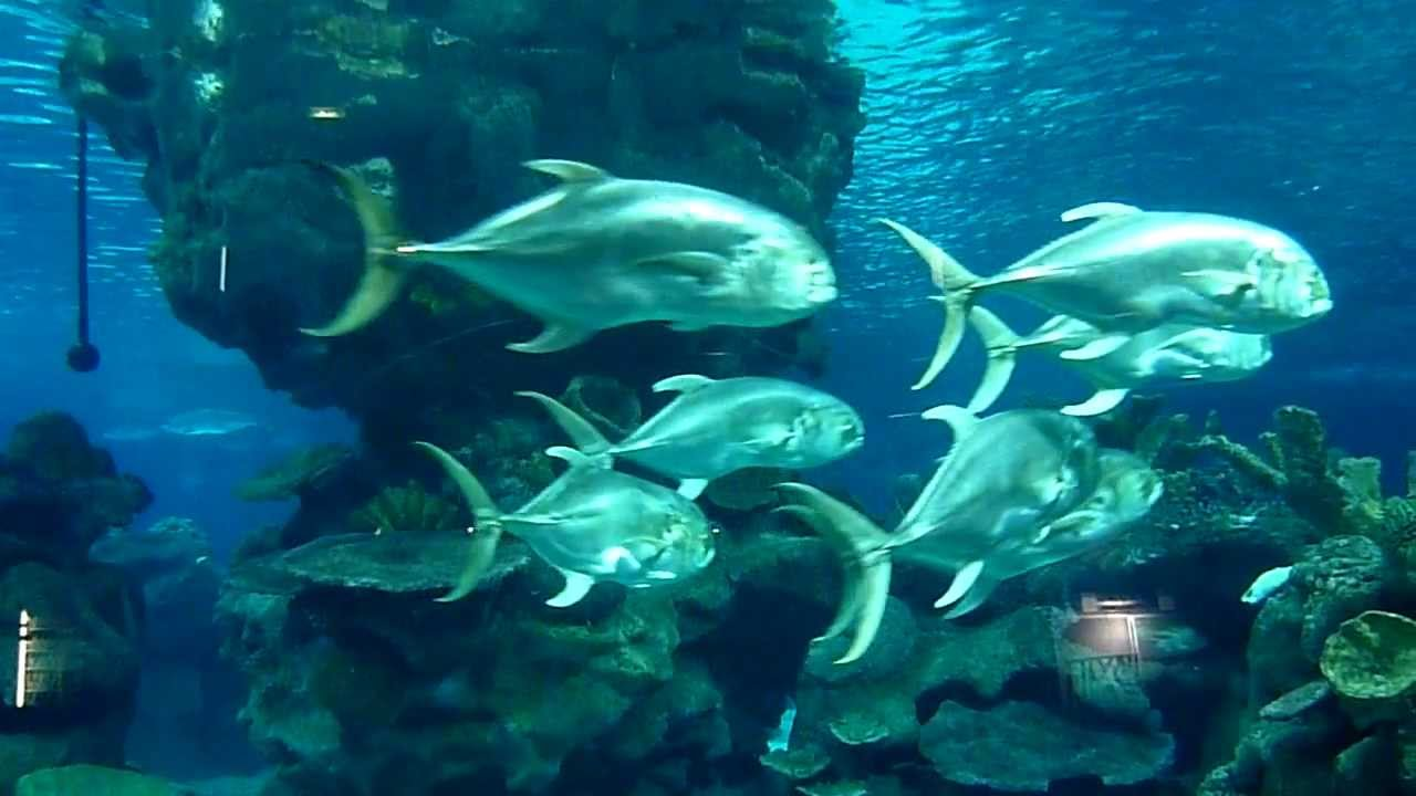 A Visit To The Blue Planet Aquarium Cheshire Youtube
